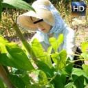 西岡紗希 働く地方のお母さん ~農業を営む未亡人 前編~
